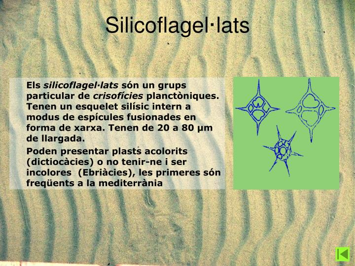 Silicoflagel·lats