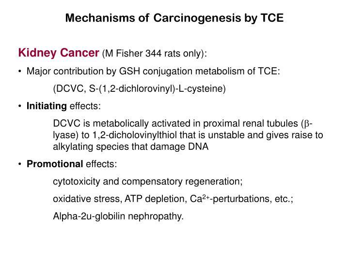 Mechanisms of Carcinogenesis by TCE