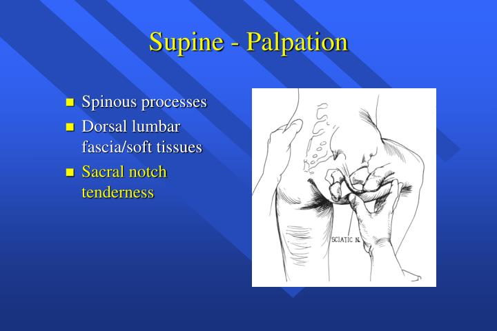 Supine - Palpation