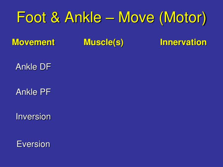 Foot & Ankle – Move (Motor)