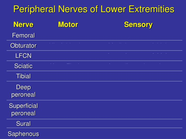 Peripheral Nerves of Lower Extremities