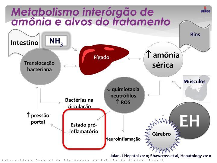 Metabolismo interórgão de amônia e alvos do tratamento