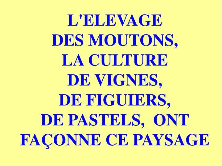L'ELEVAGE                 DES MOUTONS,            LA CULTURE                 DE VIGNES,                   DE FIGUIERS,                  DE PASTELS,  ONT FAÇONNE CE PAYSAGE
