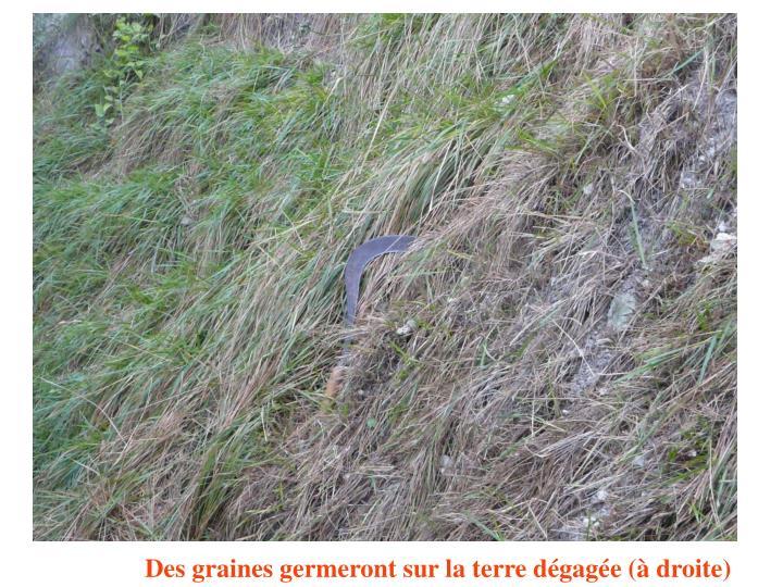 Des graines germeront sur la terre dégagée (à droite)
