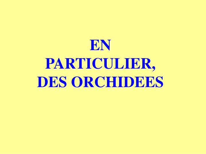 EN PARTICULIER, DES ORCHIDEES