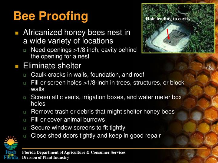 Bee Proofing