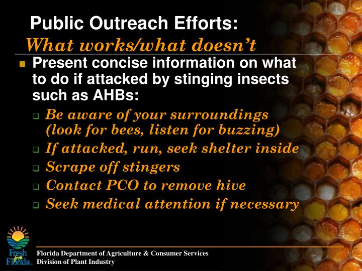 Present concise information on what to do if attacked by stinging insects such as AHBs: