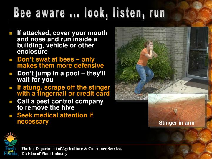 Bee aware ... look, listen, run