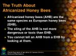 the truth about africanized honey bees