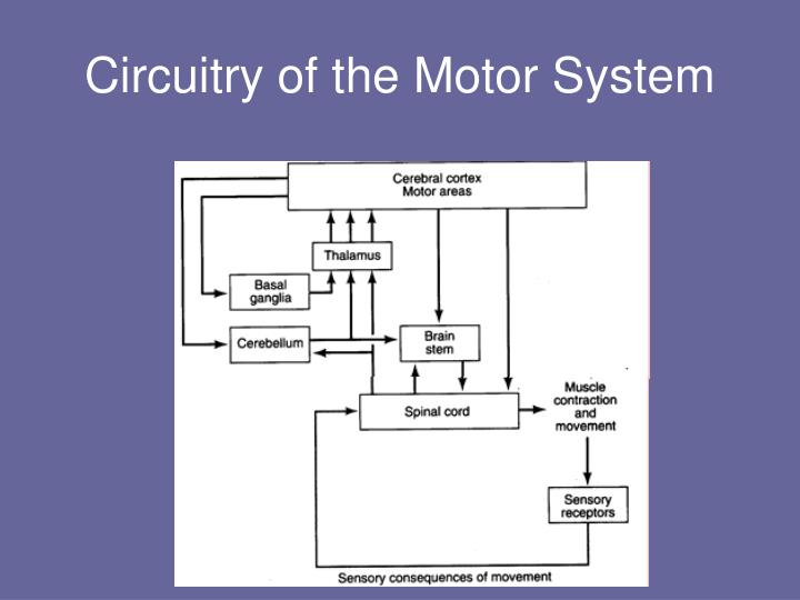 Circuitry of the Motor System