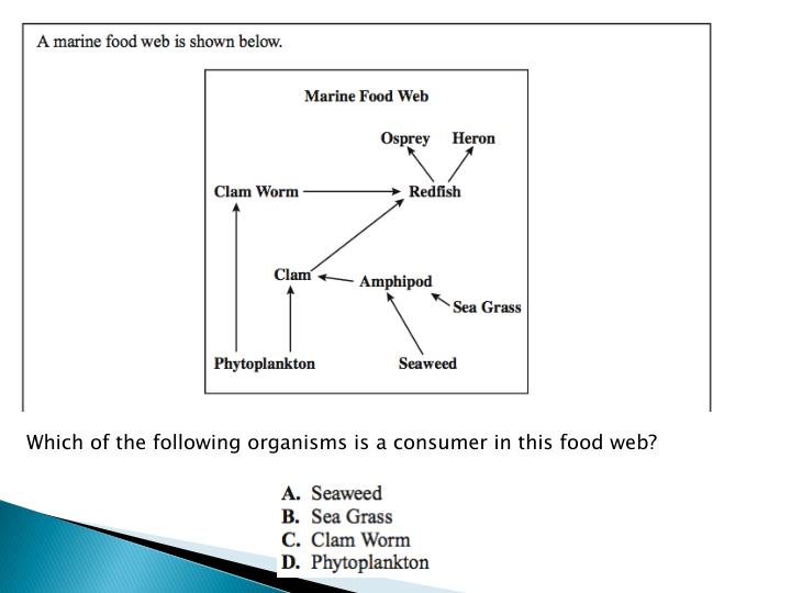 Which of the following organisms is a consumer in this food web?