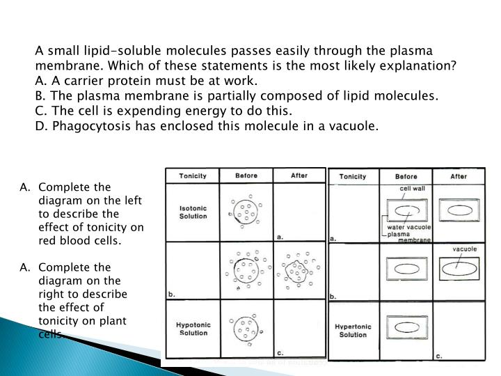 A small lipid-soluble molecules passes easily through the plasma membrane. Which of these statements is the most likely explanation?