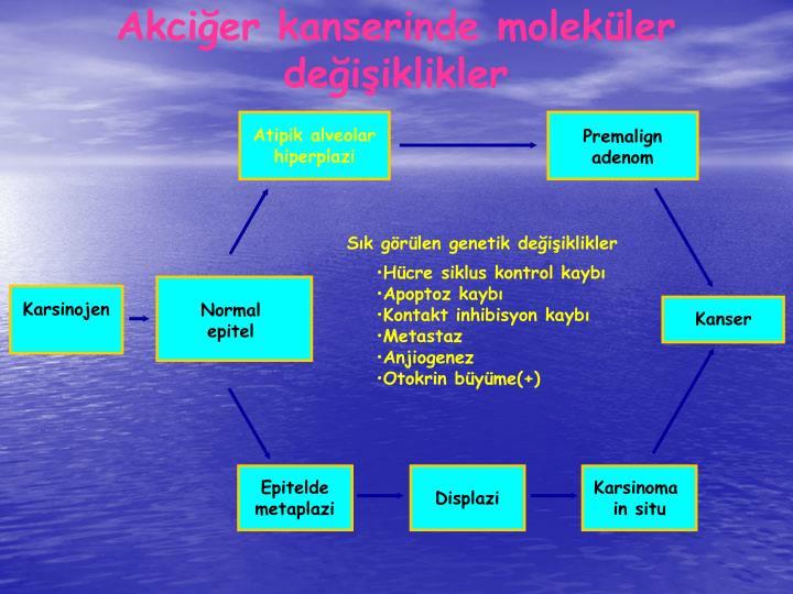 Akcier kanserinde molekler deiiklikler