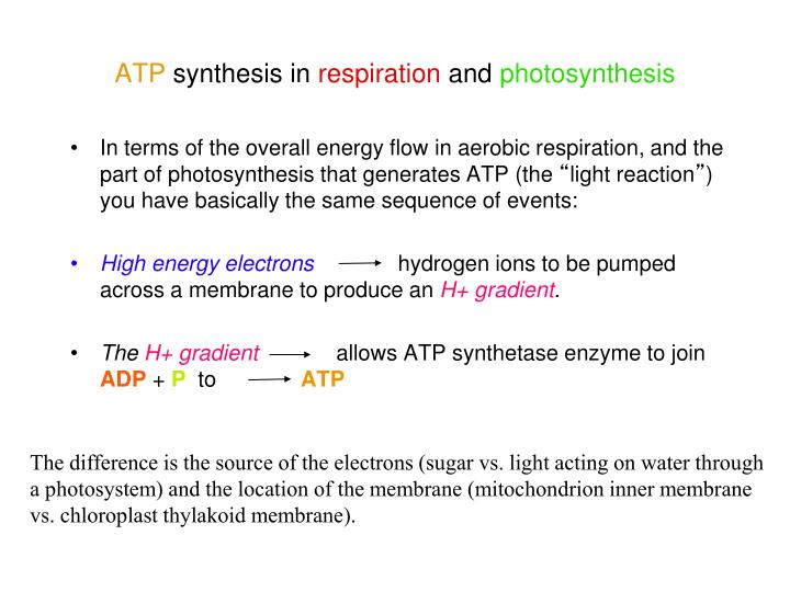 In terms of the overall energy flow in aerobic respiration, and the part of photosynthesis that generates ATP (the
