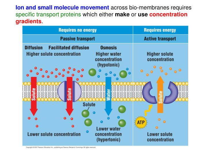 Ion and small molecule movement