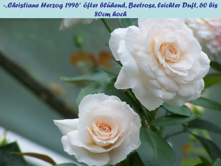 """-""""Christiane Herzog 1996"""" öfter blühend, Beetrose, leichter Duft, 60 bis 80cm hoch"""