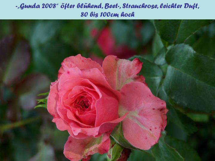 """-""""Gunda 2008"""" öfter blühend, Beet-, Strauchrose, leichter Duft,"""