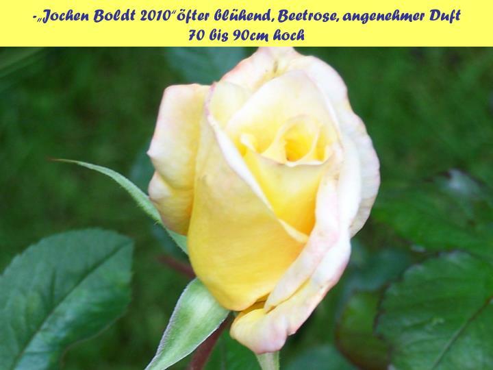 "-""Jochen Boldt 2010""öfter blühend, Beetrose, angenehmer Duft"