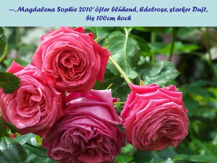 """---""""Magdalena Sophie 2010""""öfter blühend, Edelrose, starker Duft,"""