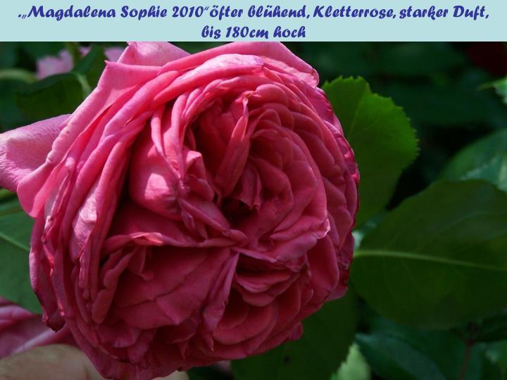 """.""""Magdalena Sophie 2010""""öfter blühend, Kletterrose, starker Duft,"""