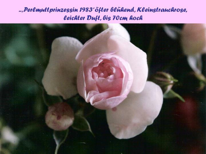 """..""""Perlmuttprinzessin 1983""""öfter blühend, Kleinstrauchrose,"""