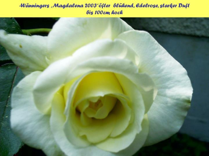 """-Wänningers """"Magdalena 2003""""öfter  blühend, Edelrose, starker Duft"""