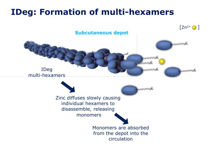 IDeg: Formation of multi-hexamers