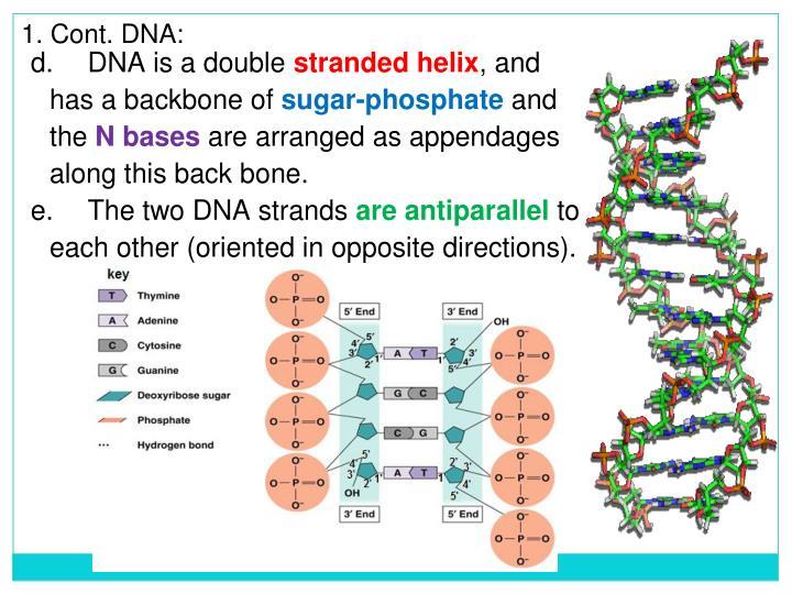 1. Cont. DNA: