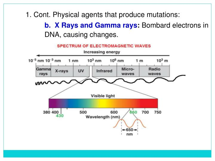 1. Cont. Physical agents that produce mutations: