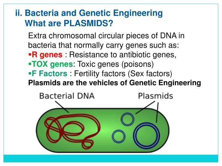 ii. Bacteria and Genetic Engineering