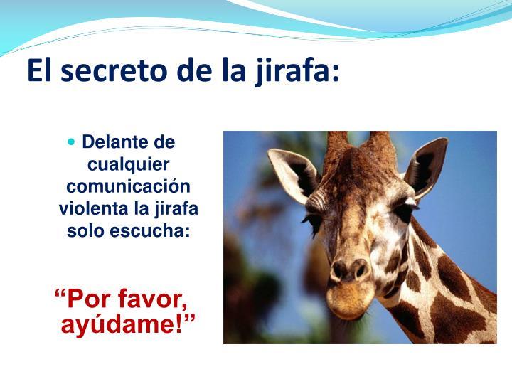 El secreto de la jirafa: