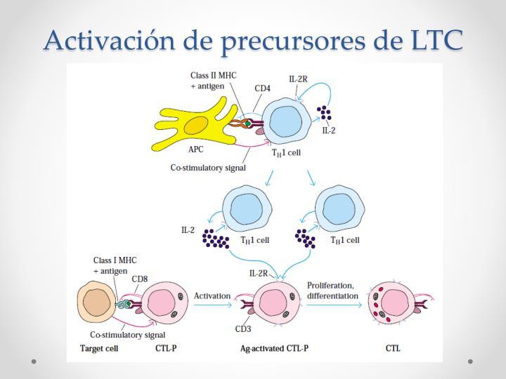 Activación de precursores de LTC