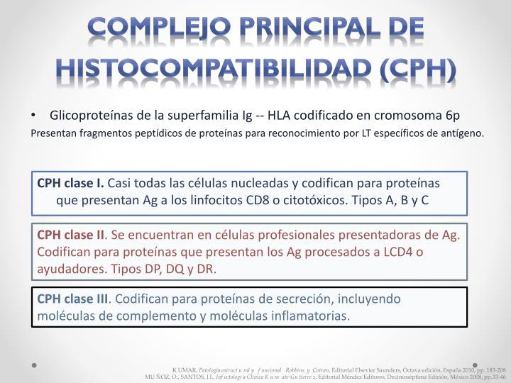 Complejo principal de histocompatibilidad (CPH)