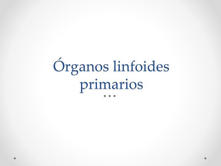 Órganos linfoides primarios