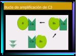 bucle de amplificaci n de c31