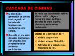 cascada de cininas1