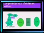 componentes de la v a cl sica y lectinas