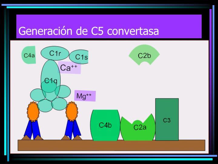 Generación de C5 convertasa