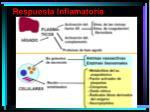 respuesta inflamatoria2
