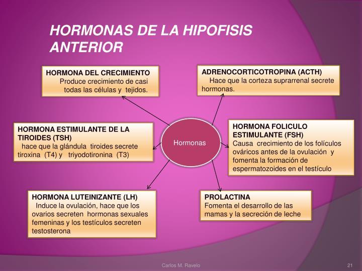 HORMONAS DE LA HIPOFISIS ANTERIOR