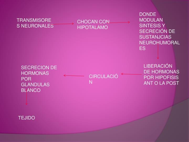 DONDE MODULAN SINTESIS Y SECRECIÓN DE SUSTANJCIAS NEUROHUMORALES