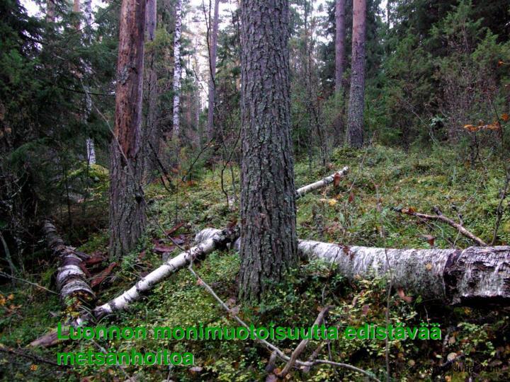 Luonnon monimuotoisuutta edistv metsnhoitoa