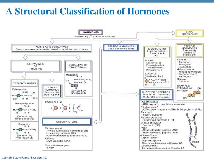 A Structural Classification of Hormones