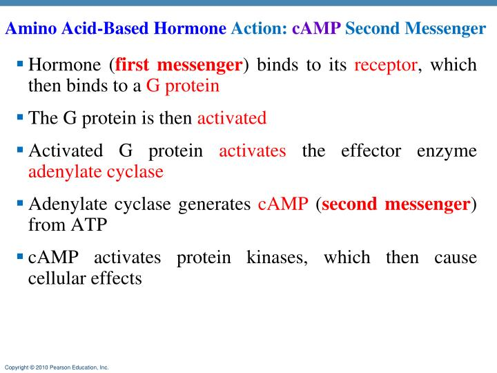 Amino Acid-Based Hormone