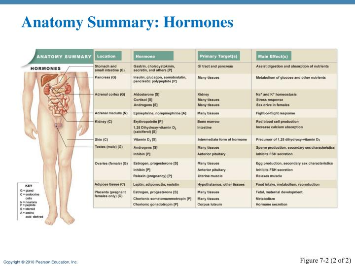 Anatomy Summary: Hormones