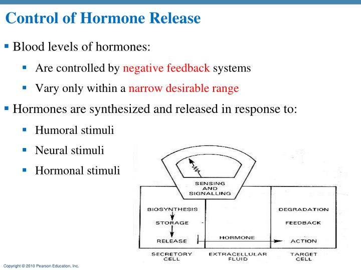 Control of Hormone Release