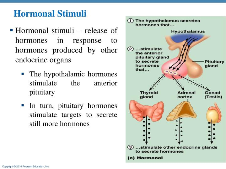 Hormonal Stimuli