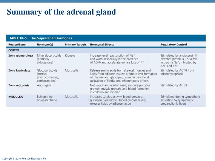 Summary of the adrenal gland