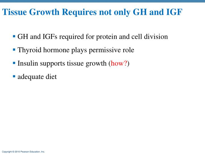 Tissue Growth Requires not only GH and IGF