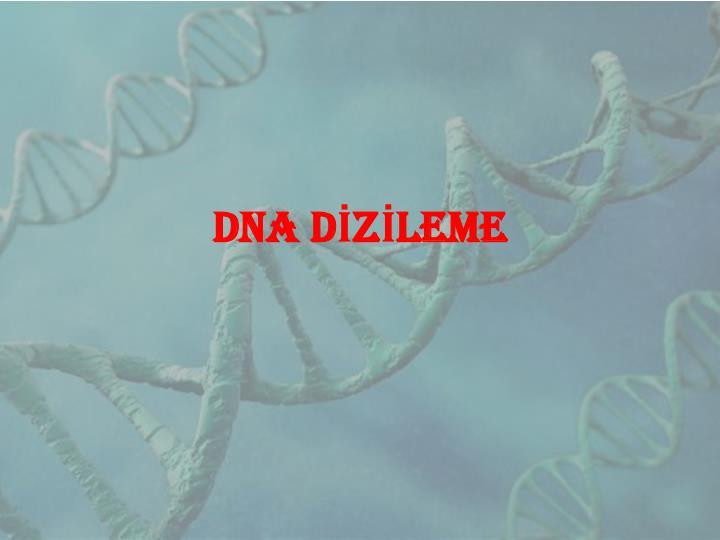 DNA DİZİLEME